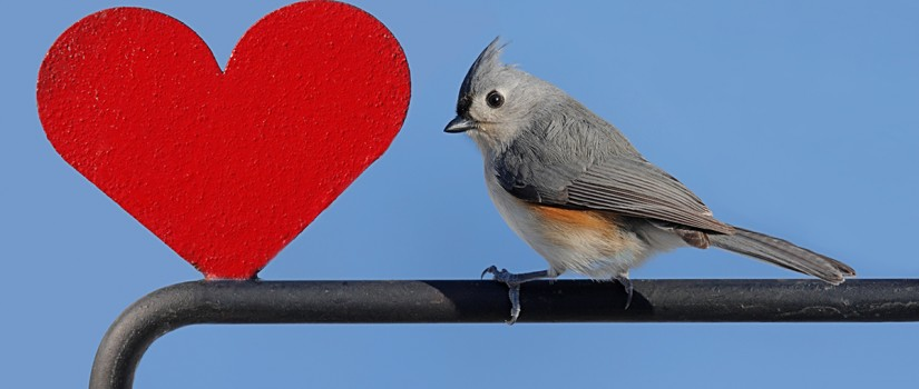 bird-heart-825×350